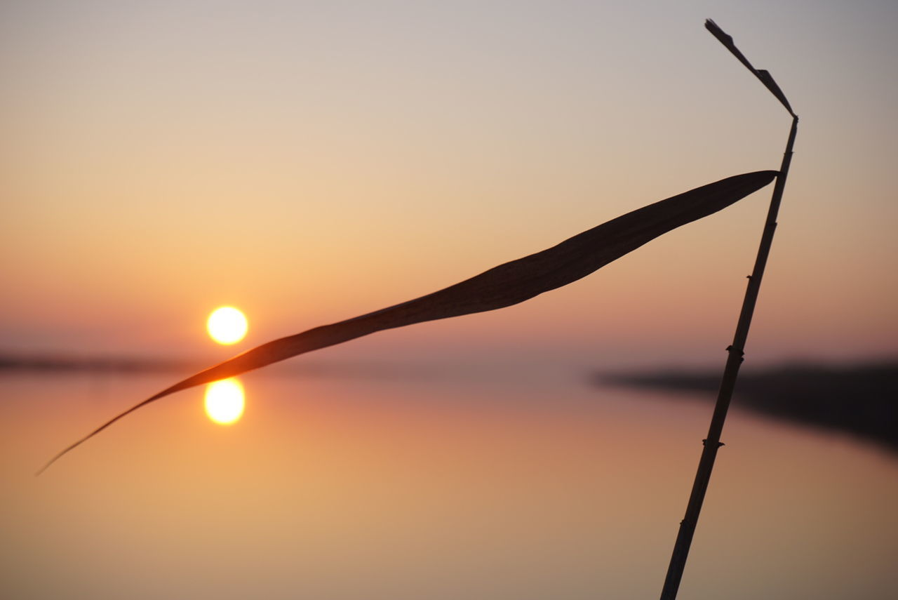 A Leaf splits the Sun. Sunset Nature Outdoors Water Beauty In Nature Tranquility Landscape No People Scenics Reflections Sonya6000 Nofilters Noedit Nature Photography Landschaft Flatland River Deltadelpo Silhouette Shadows Winterscapes Winter Adriatic Coast