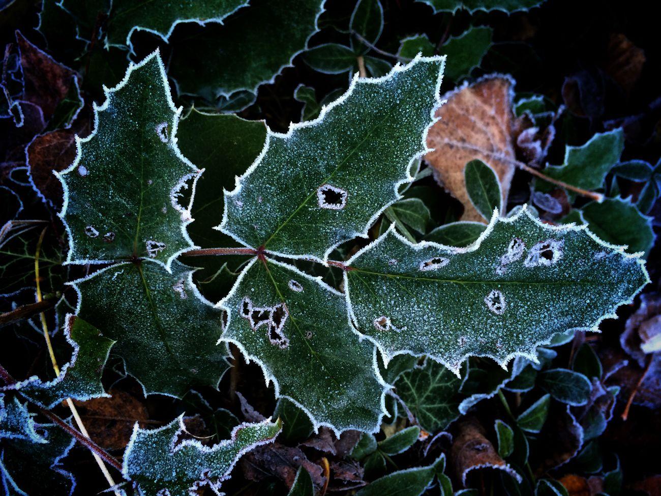 Winterwonderland In My Garden Freezing Plants And Flowers EyeEm Nature Lover