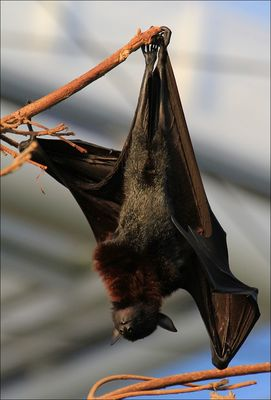 bats at Gelsenkirchen by Thomas