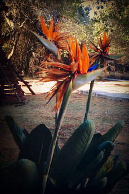 flowers at Waterberg Game Park by Marcel Schmidt