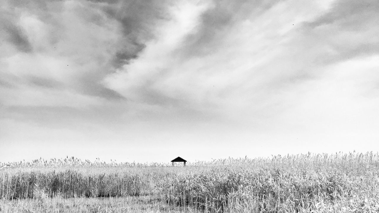 Chongming Dongtan wetland Reeds Sky Nature Tranquility Outdoors Day No People Cloud - Sky Landscape Beauty In Nature Scenics By Iphone 6+