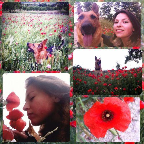 🐛Tarde de amapolas 🐝 😊😊😊 Amapolas Thor  Thorthedog Beautiful Goodmoments Photooftheday Nature_collection Dog Dogs Dog Of The Day