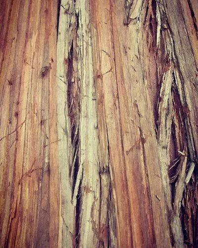 Wmm_brown Brown Bark Treebark Tree Rsa_trees Tt_rt_nature Pocket_trees
