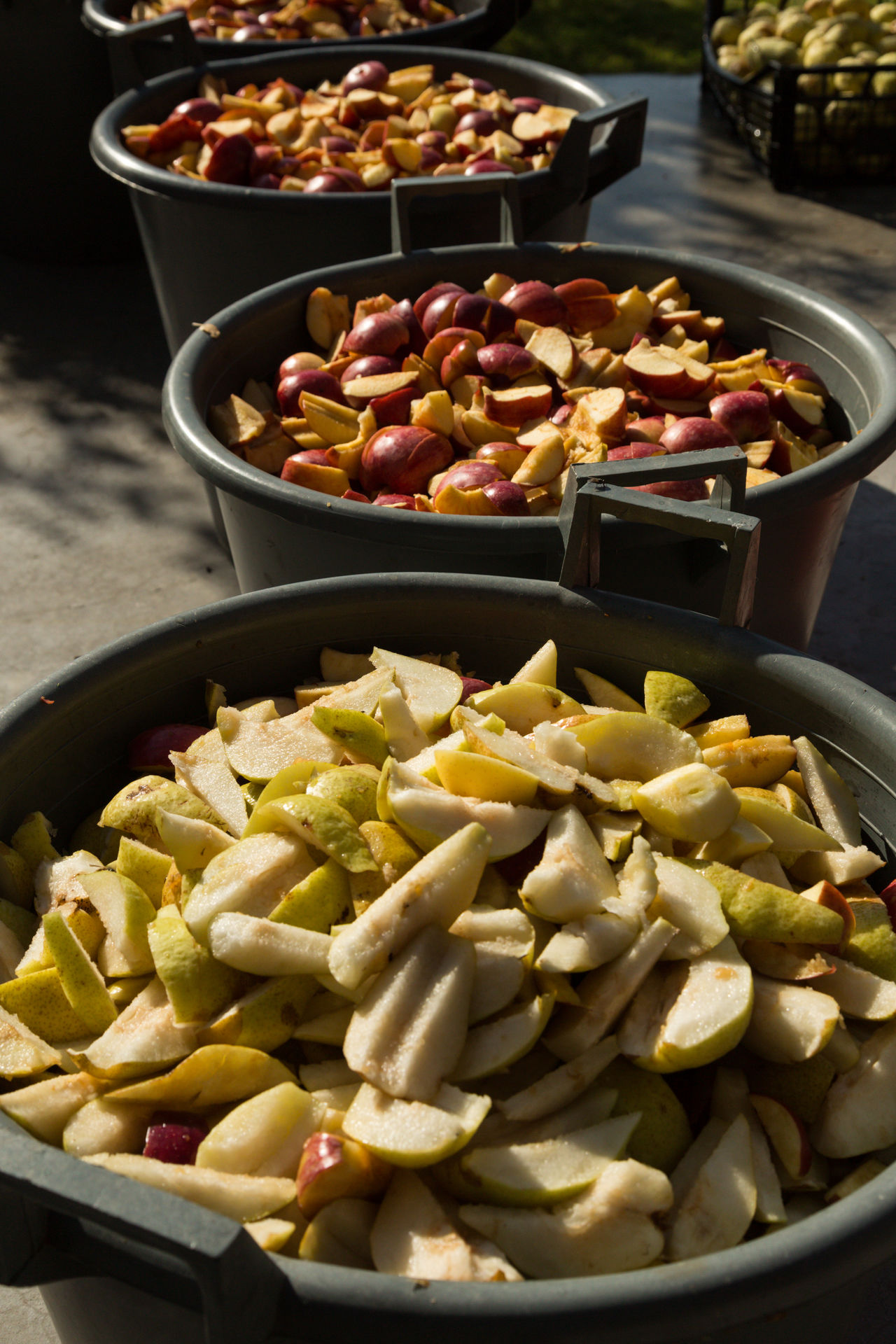 containers of sliced apples and pears for making molasses Apples Bounty Buckets Fruits Kazan Making Molasses Pears Pekmez Pekmez Yapimi Pots Prepared Raw Raw Food Sliced Sliced Fruits Turkey