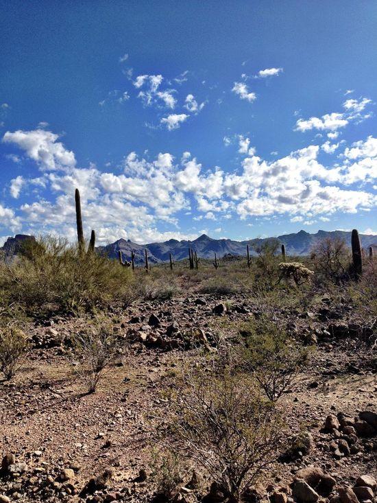 Blue Sky Outdoors Outdoor Photography Sky_collection Sky And Clouds Sky Arizona Nature Photography Landscape Photography Landscapes Landscape_photography Mountain Desert Nationalpark Nature Beautiful Nature