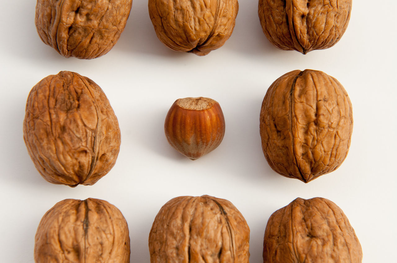 Find the courage to be different like an hazelnut in a world of walnut. Autumn Background Brown Composition Food Game Hazelnut Healty Italia Italy Natural Naturally Noci Number Nut Nuts Play Scoiattolo Squirrel Summer Three Walnut White Background