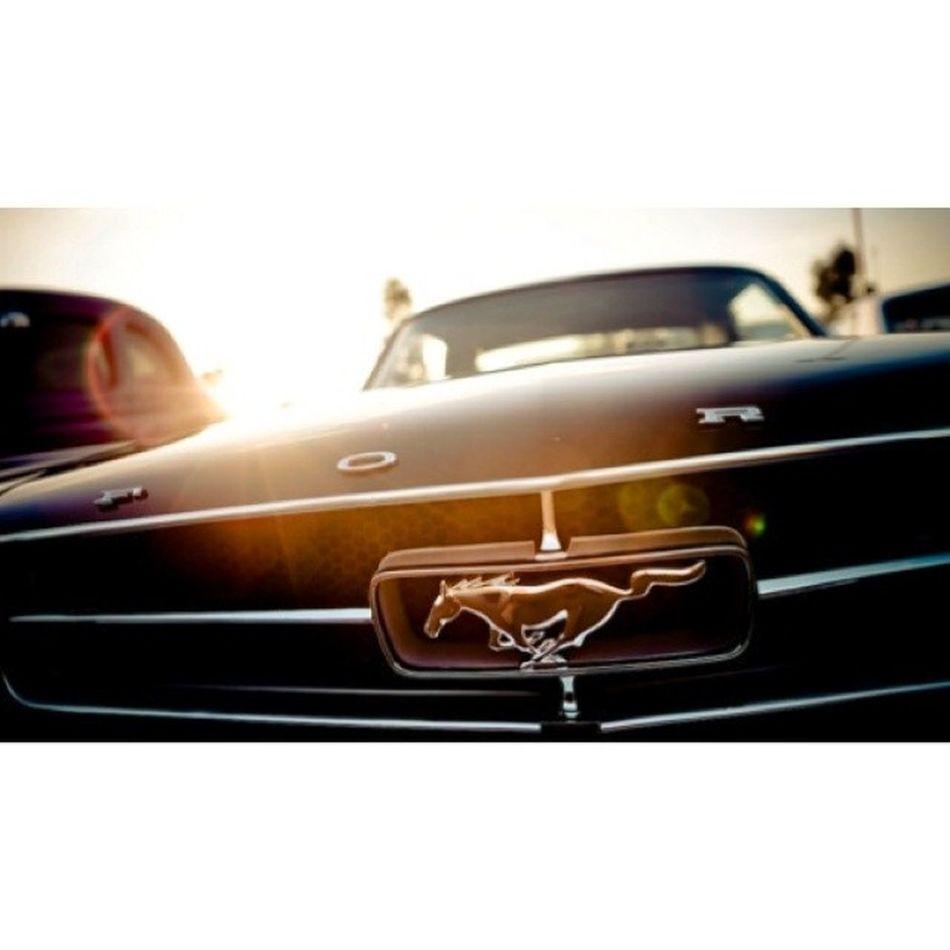 Bu amblem ayrı heyecanlandırıyor beni :) Cars Car 67mustang Mustang classic ford new old drive sportscar vehicle sun