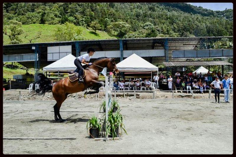 i♥horses Horses Horse Riding That's Me