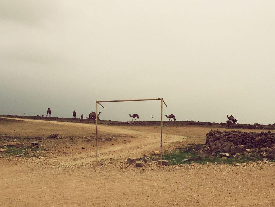 Good place to play football in Taqah, Oman. Camels are welcome Football Taqah Oman Camels Camels Love Football Soccer Field Camel Arab World Animal Oman_photography
