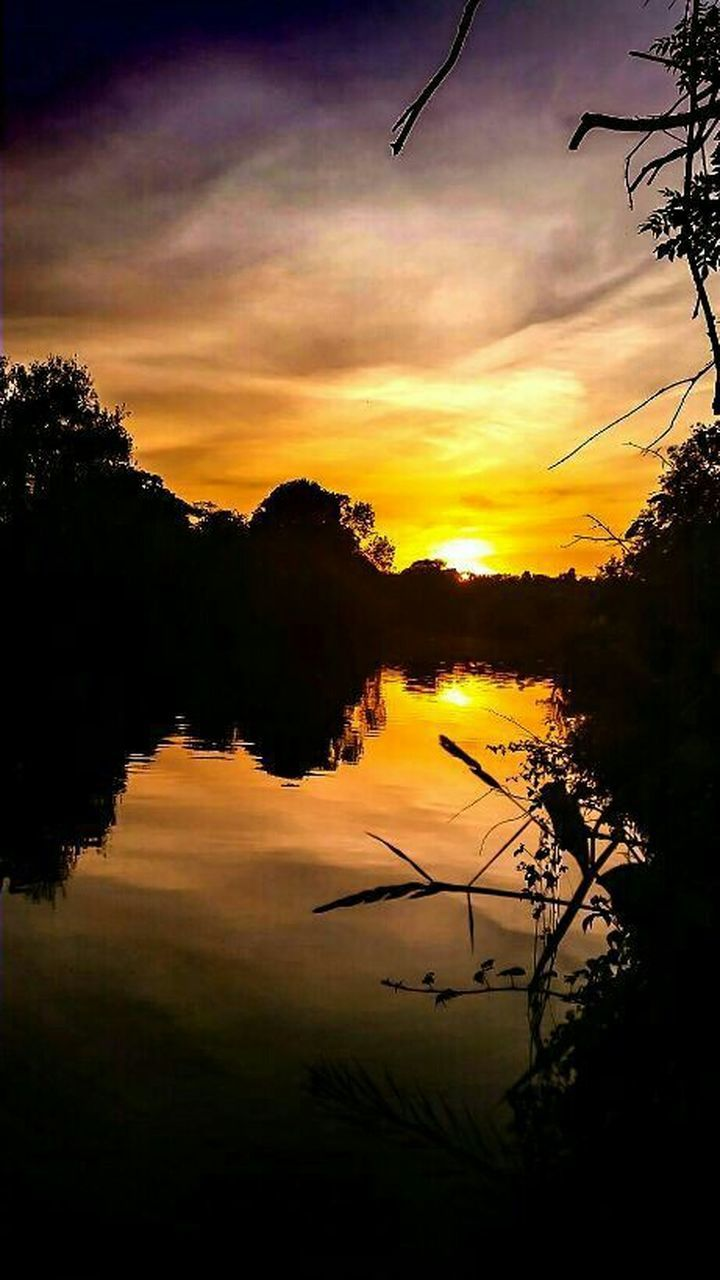 sunset, reflection, tree, nature, lake, silhouette, beauty in nature, water, scenics, tranquil scene, tranquility, outdoors, plant, no people, sky, cloud - sky, bird, day