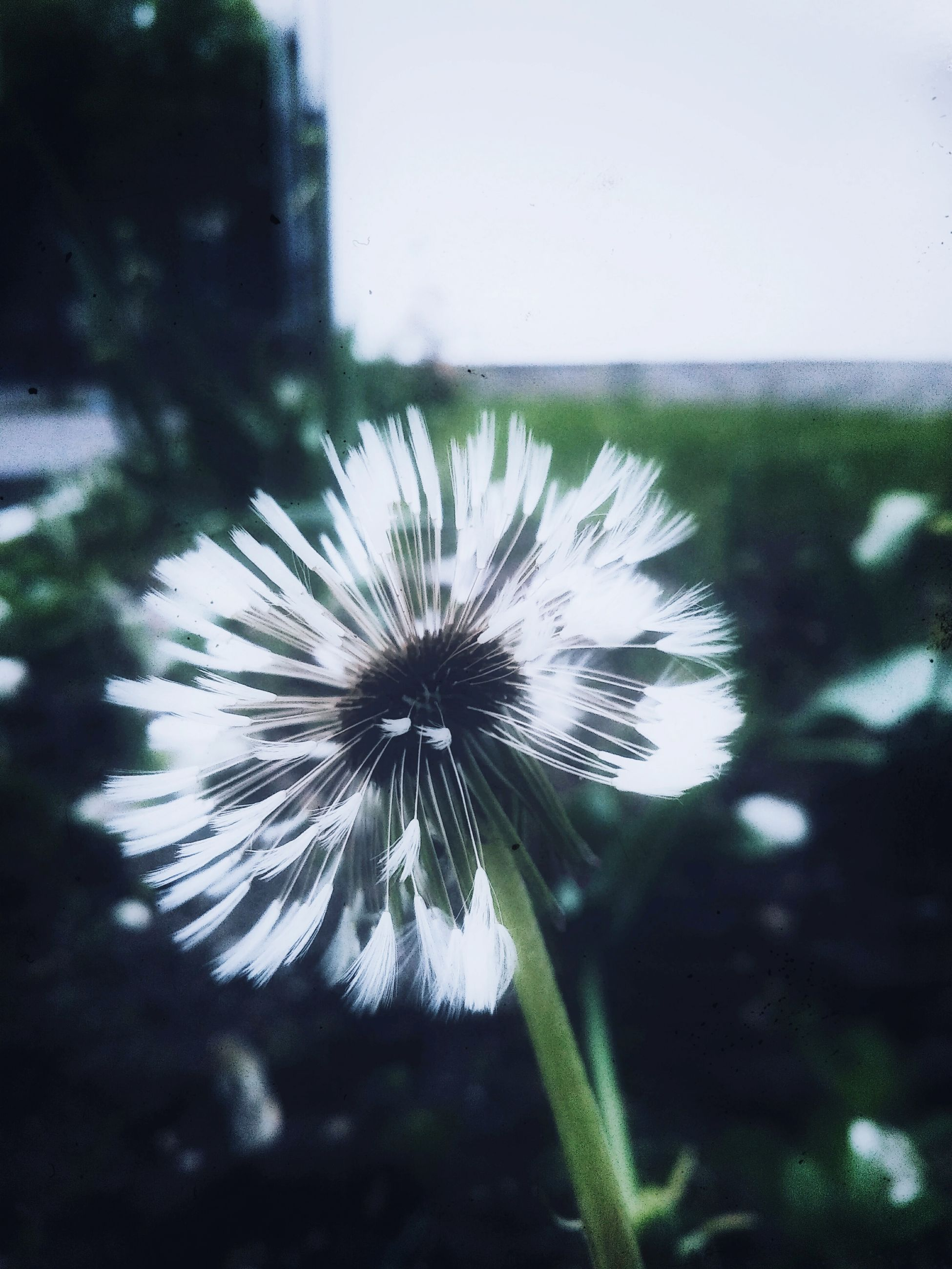 flower, fragility, nature, freshness, flower head, day, outdoors, beauty in nature, growth, close-up, no people, plant