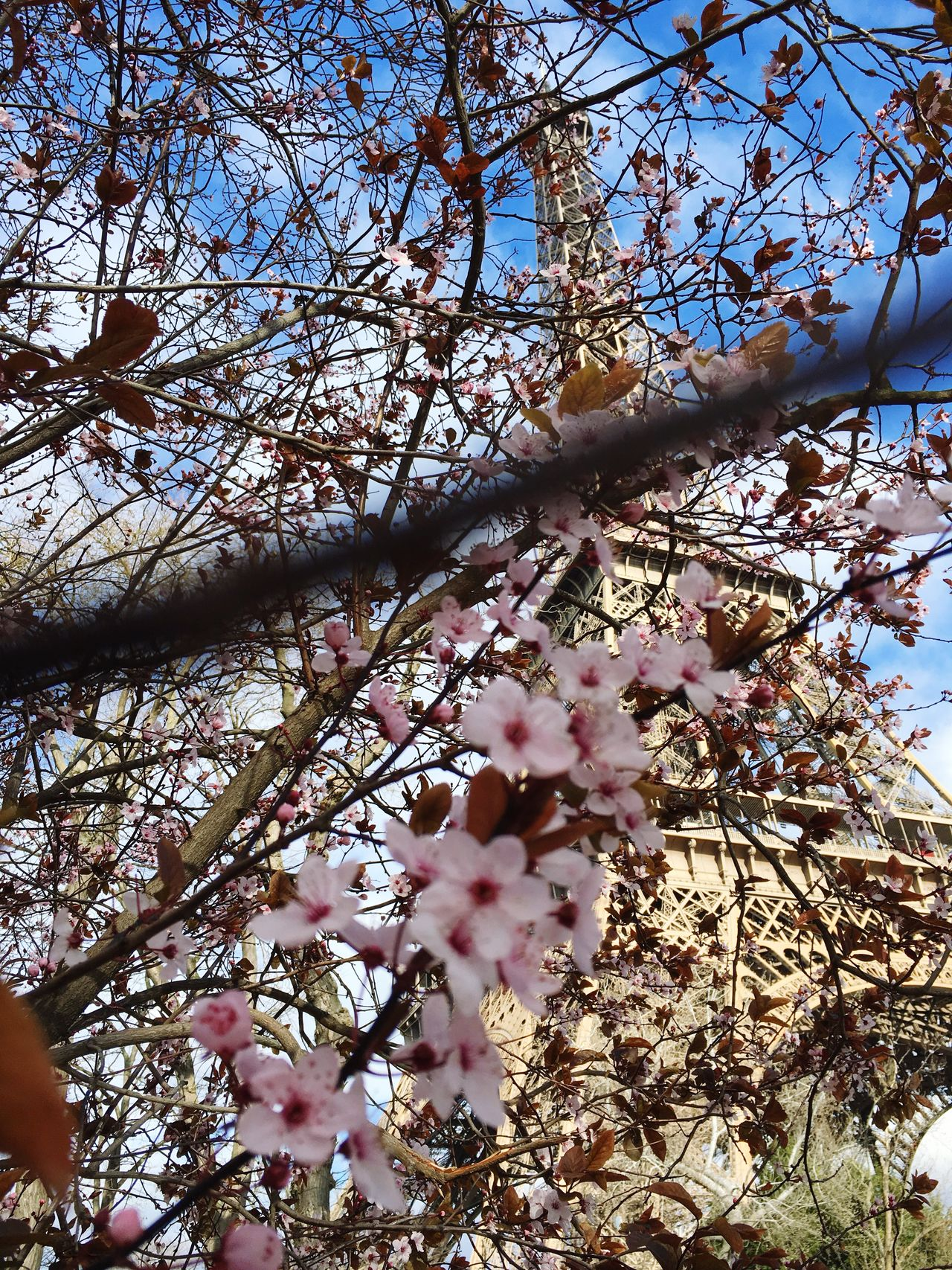 Beautiful day with sun and flowers Paris JesuisParis Urban Spring Fever Hello World Enjoying Life Torre Eiffel Beautifulcity Sunny Day Honeymoon Beautiful Day Travel Photography Iphonephotography Iphone6s Photography Iphone6s Taking Photos Relaxing Spring Has Arrived Spring Flowers Springtime Nature_collection Nature Flower Flowers Eiffel Tower Backgrounds