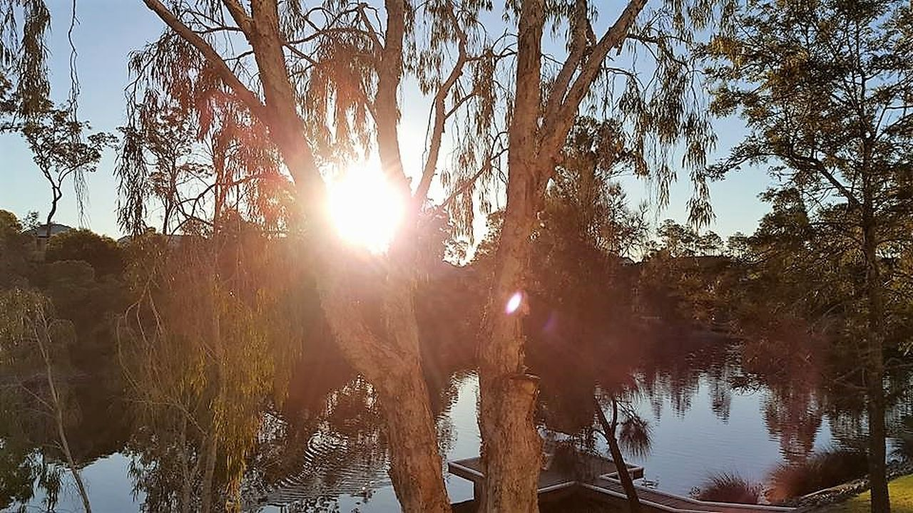 Watching the sun set by the lake! Beauty In Nature Branch Day Growth Lens Flare Low Angle View Nature No People Outdoors Refraction Sky Sun Sunbeam Sunlight Sunset Tree