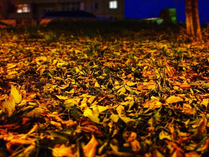 Autumn 🍂 Night Leaf Nature Yellow No People Beauty In Nature 🍁 🍂 🍁 🍂 🍃