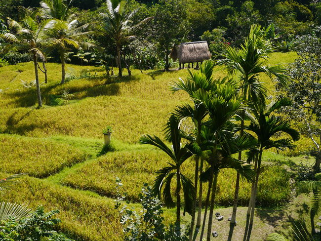 Ubud. Bali. Discover Your City Pure And Untouched (raw Image) Landscape