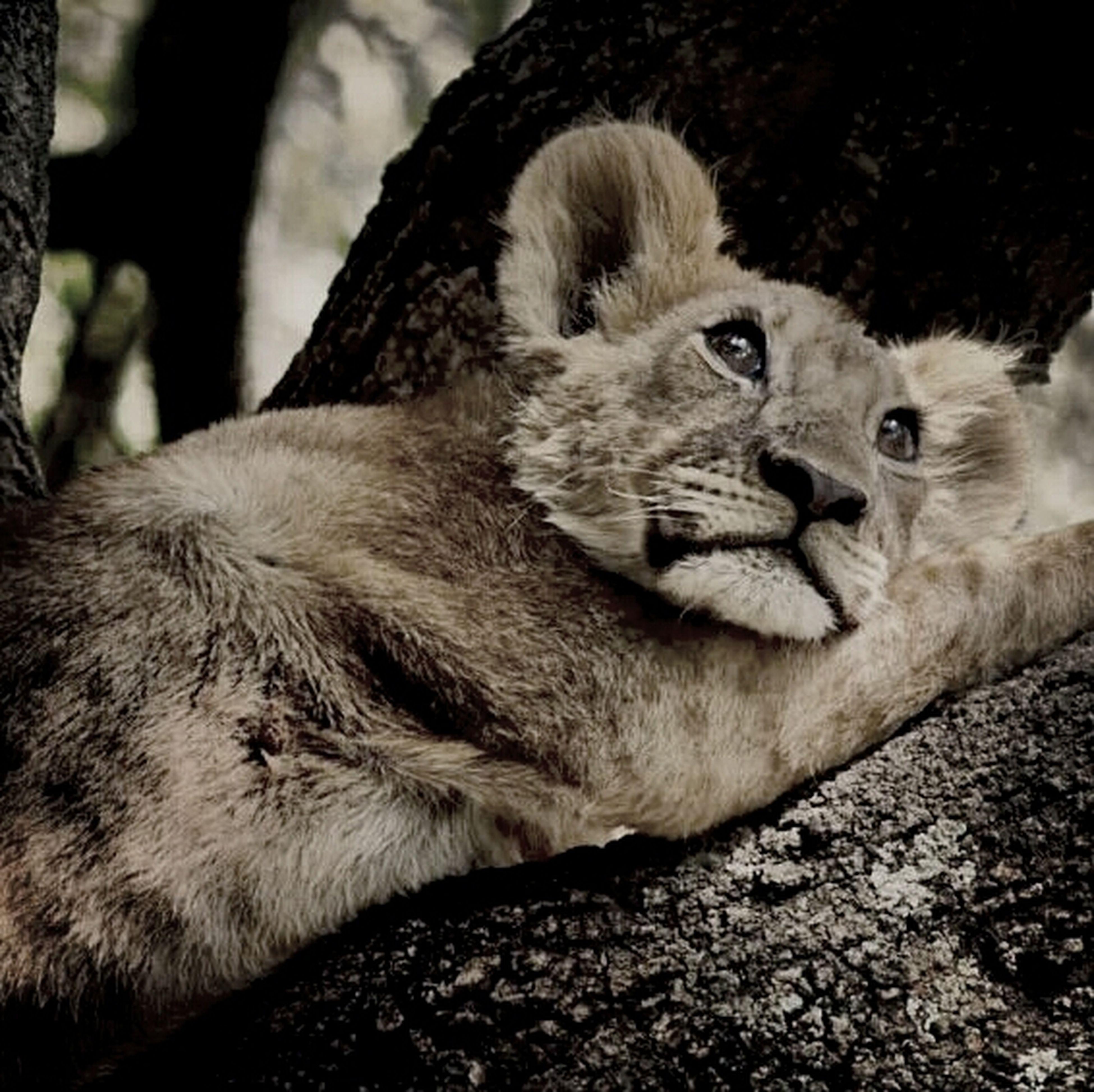 i love animals:-) Enjoying Life