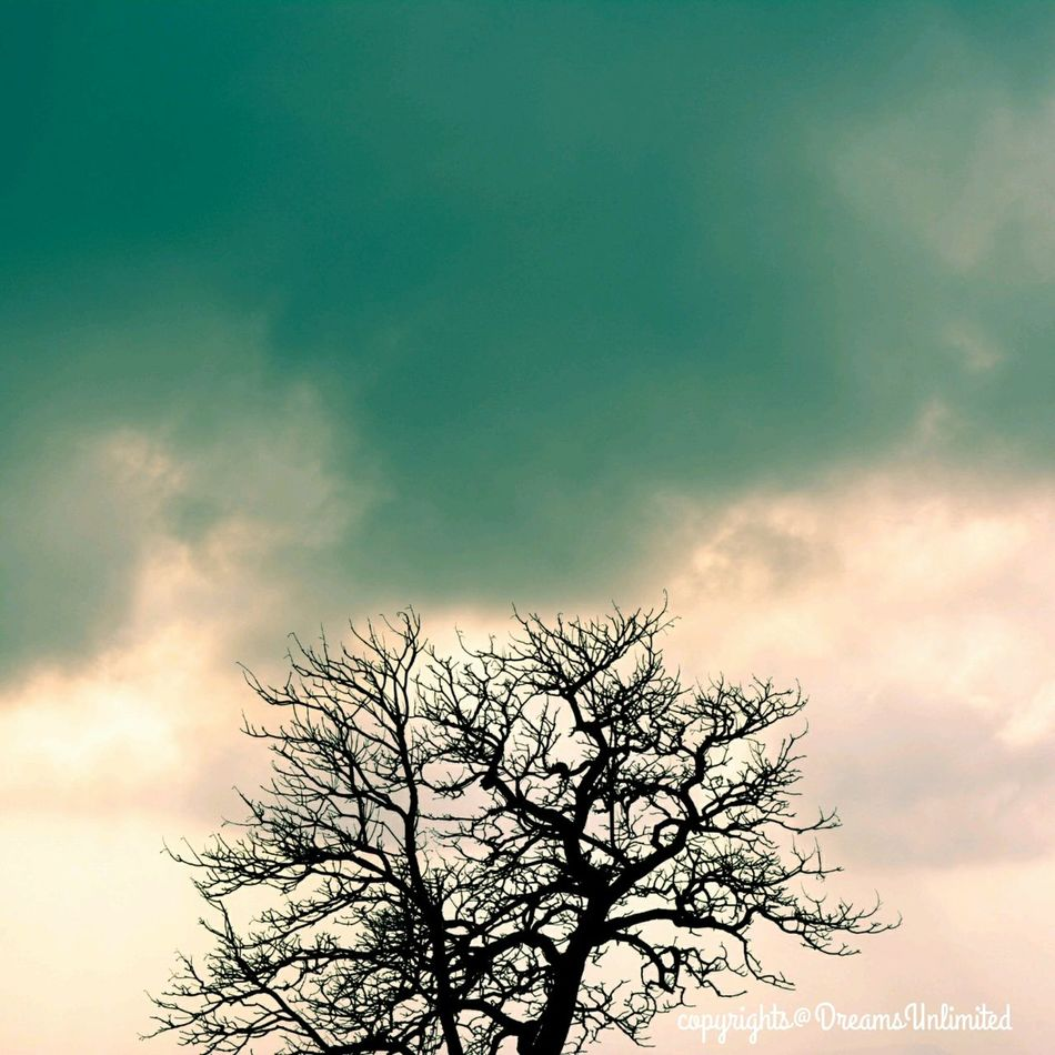 An amazing contrast and positive attitude of nature after so much wait for water, Found this tree getting dry at road and at the otherside clouds are ready to pour rain!!! Clouds Rain & Trees Nature's Act Eyemphotography Eyemnaturelover Enjoying Life Finding Inspiration Travel Photography EyeEm Best Shots Enjoying The View Miracle Of Routine Life