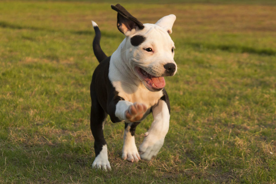 Beautiful stock photos of welpen,  Animal Themes,  Black Color,  Blurred Motion,  Canine