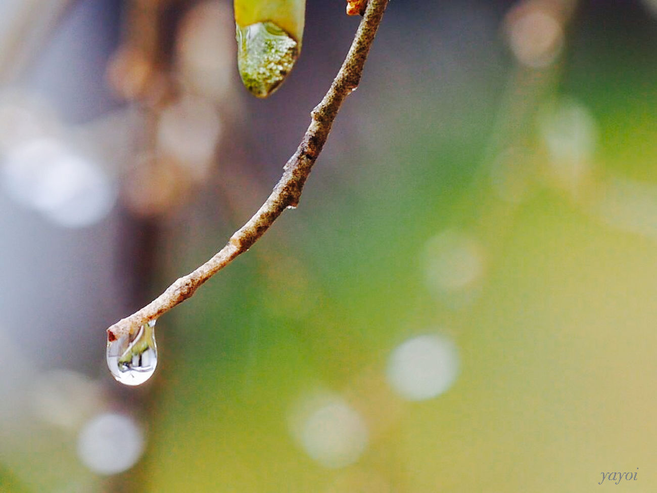 Rany Day Raindrops Rain Bokeh Photography Macro Photography Capture The Moment Open Edit EyeEm Best Shots - Nature EyeEm Nature Lover EyeEm Best Shots Hugging A Tree From My Point Of View Nature_collection Eye4photography  Tadaa Community Macro Beauty