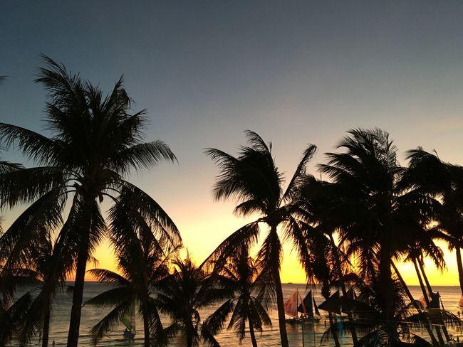 Boracay Sunset Beach Sunset✨trees✨