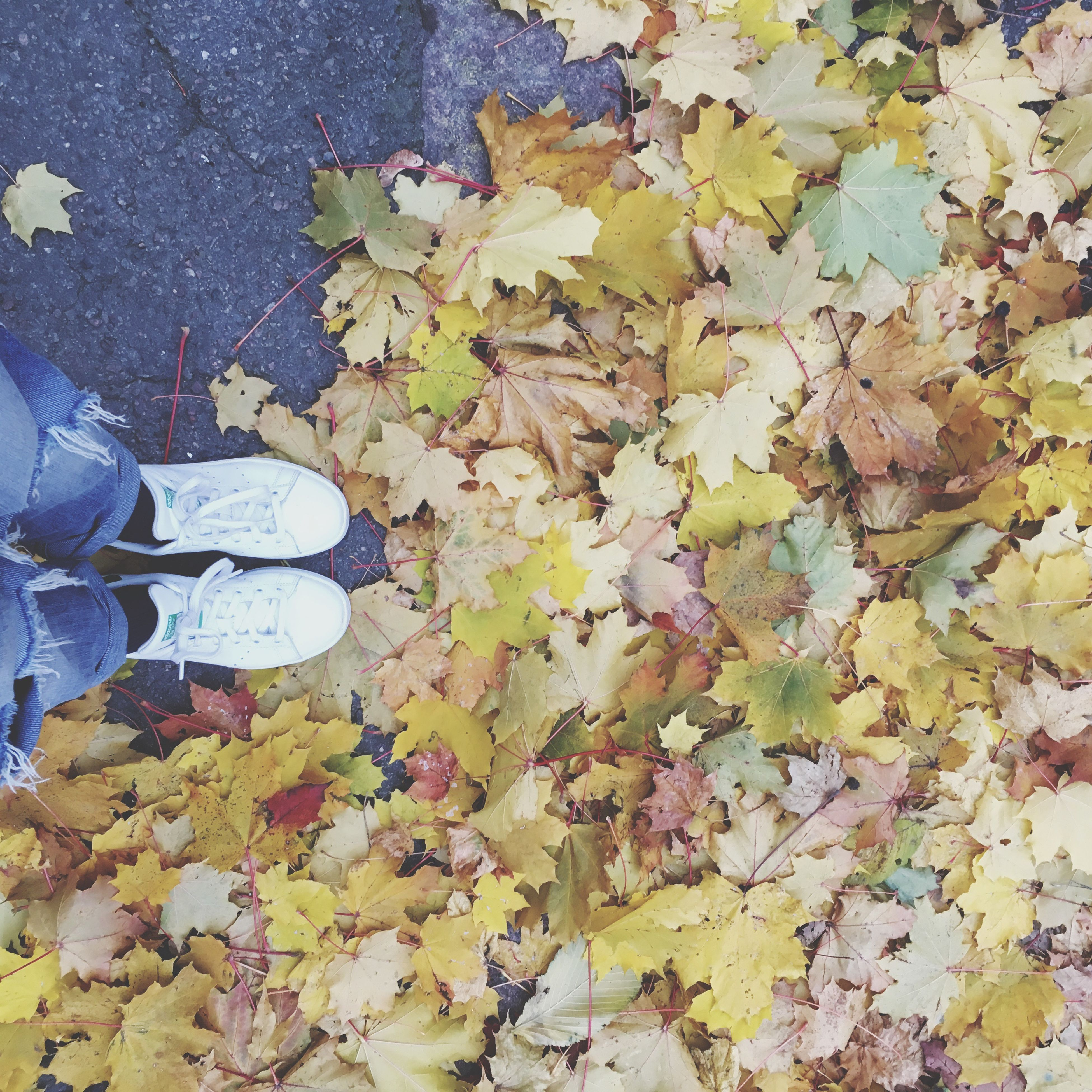 low section, leaf, person, standing, change, autumn, shoe, season, personal perspective, high angle view, auto post production filter, men, fragility, leaves, directly above, human limb, human foot, day, fallen, yellow, canvas shoe, nature, maple leaf