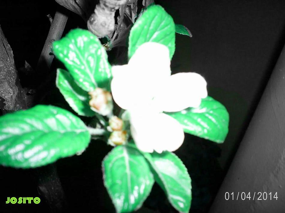 Mi manzano en flor. Ains.. no consigo que salga nitida.. My apple tree. Somosfelices Tree Porn Españoles Y Sus Fotos ParlaEste