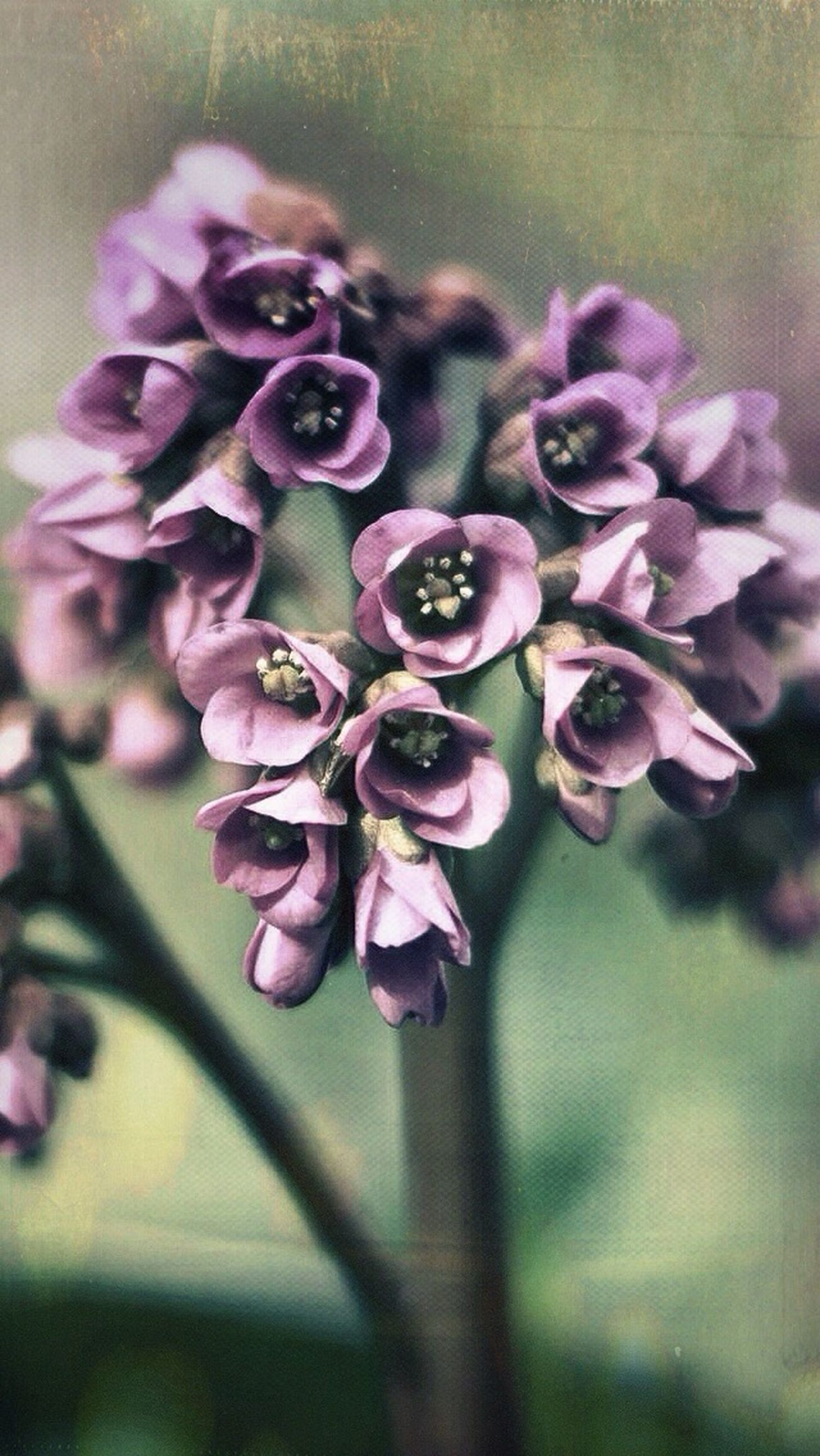 Vintage flowers with coolg greyish look Flowers Afterlightapp