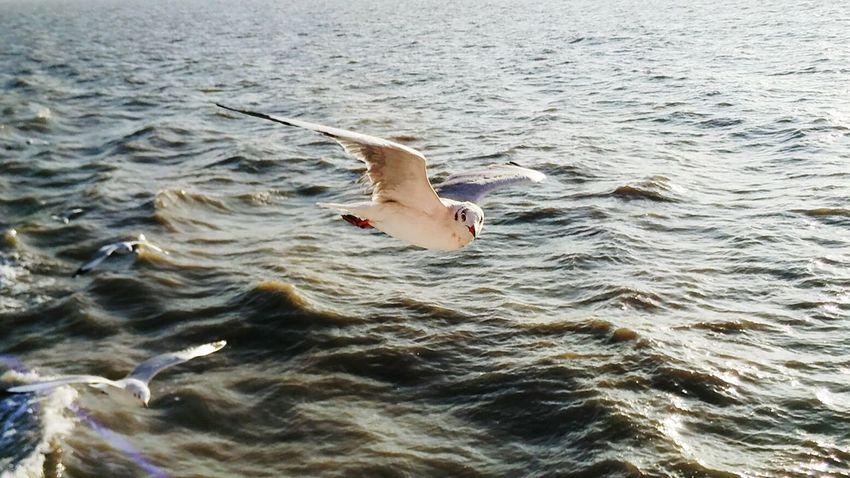 Sea Bird click at Gateway to Mandwa ferry