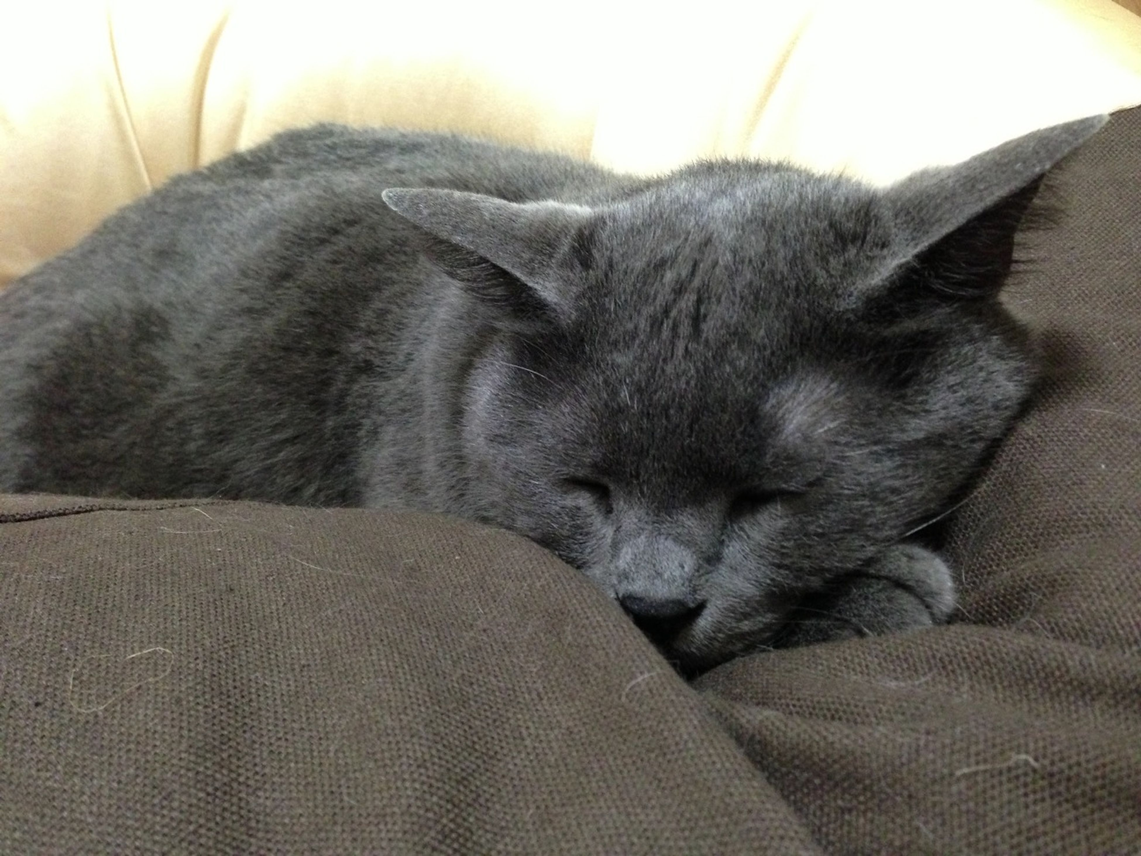 pets, domestic cat, domestic animals, mammal, cat, one animal, animal themes, feline, indoors, relaxation, whisker, resting, lying down, close-up, sleeping, bed, home interior, animal head, eyes closed, no people