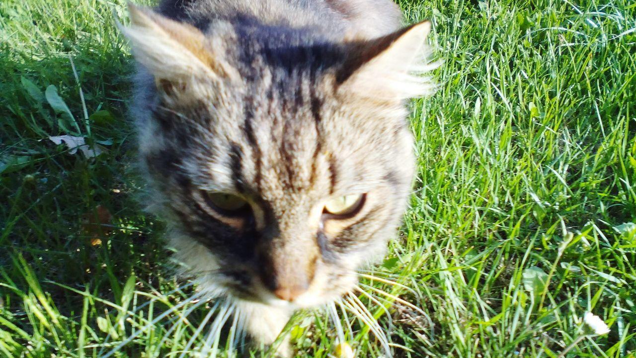 Selfie de chat campagniard (selfie Ou Portrait)?