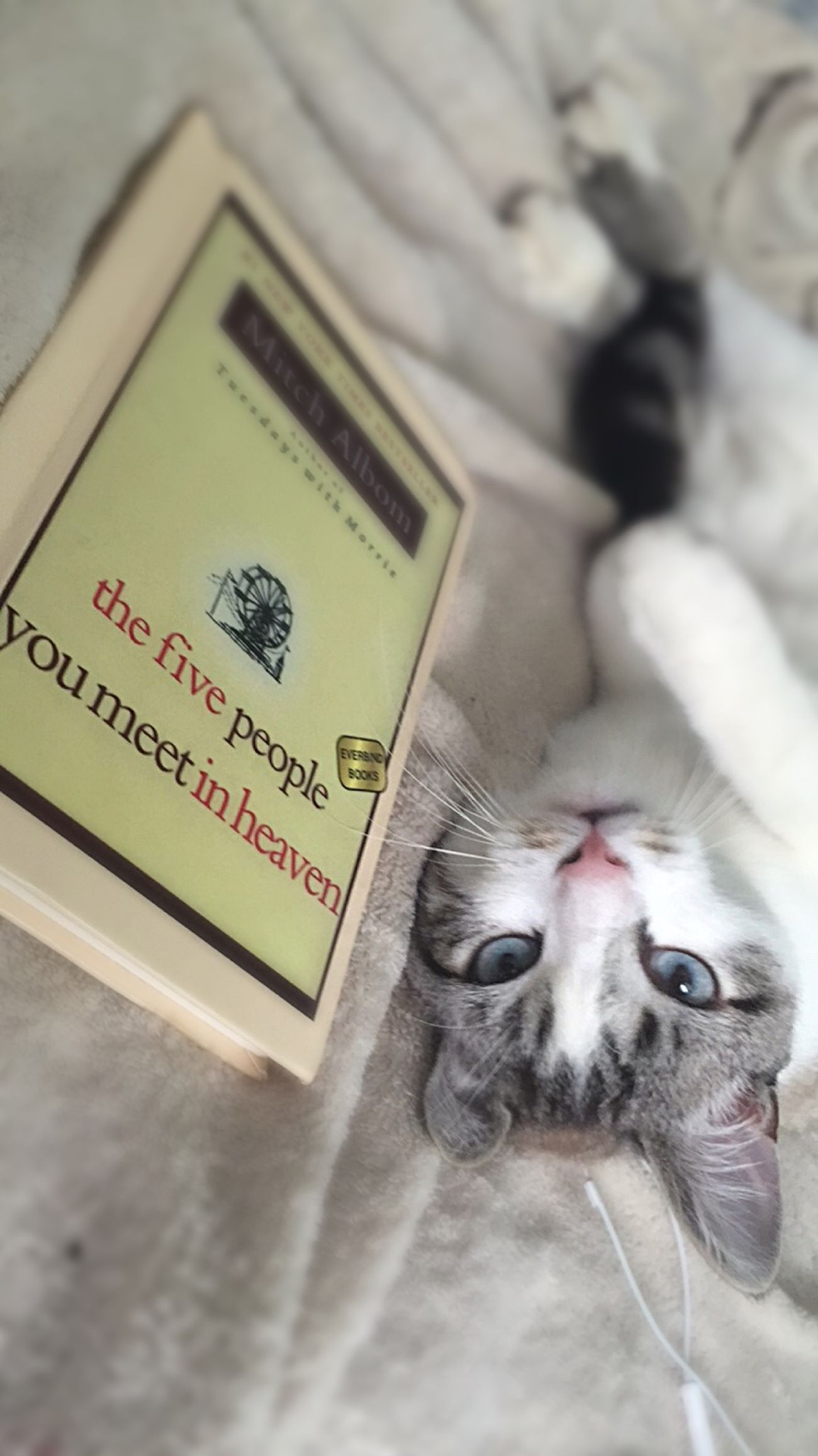 Books Five Peope You Meet In Heaven Cat Eyes