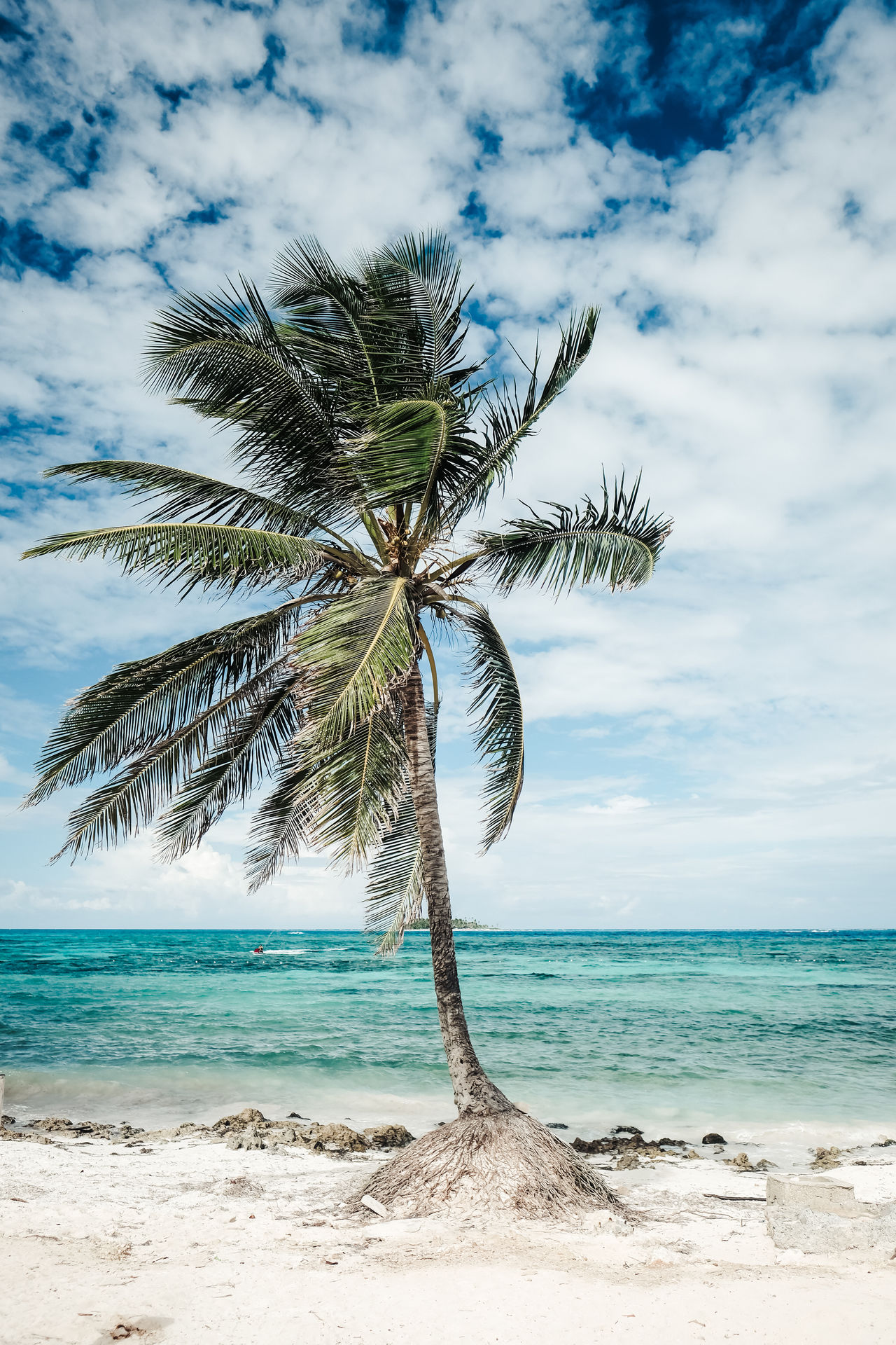 Symbol of summer! Beach Beauty In Nature Cloud - Sky Day Horizon Over Water Idyllic Nature No People Outdoors Palm Tree Scenics Sea Sky Summer Tranquil Scene Tranquility Tree Tree Trunk Water