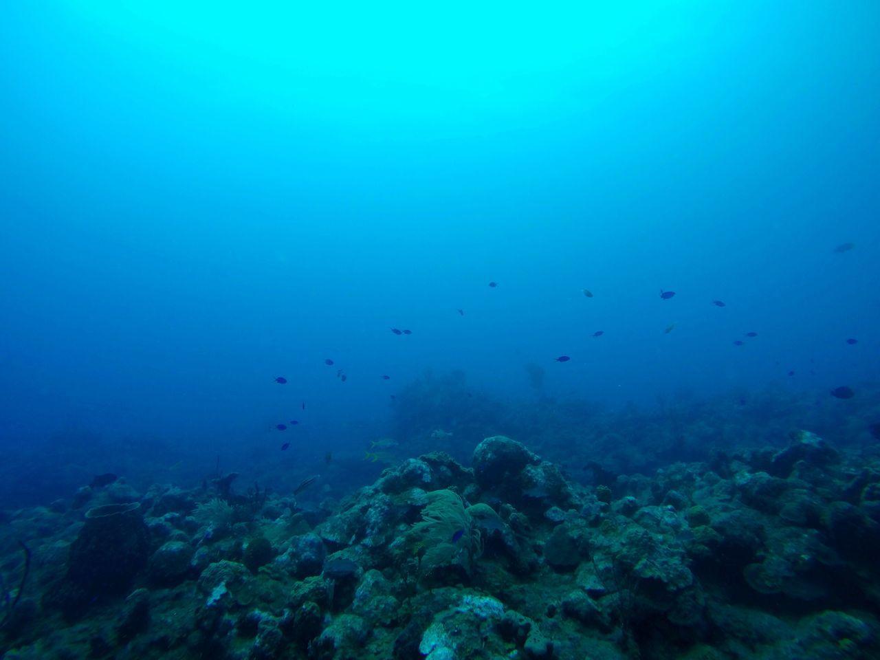 The Great Outdoors - 2017 EyeEm Awards UnderSea Underwater Blue Sea Life Nature Scuba Diving