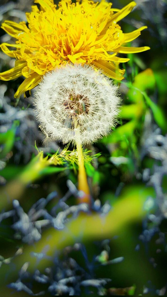 Lusk Wyoming My Back Yard From Fluff To Yellow Flower Hanging Out Relaxing Enjoying Life No People Abstract Photography Outdoor