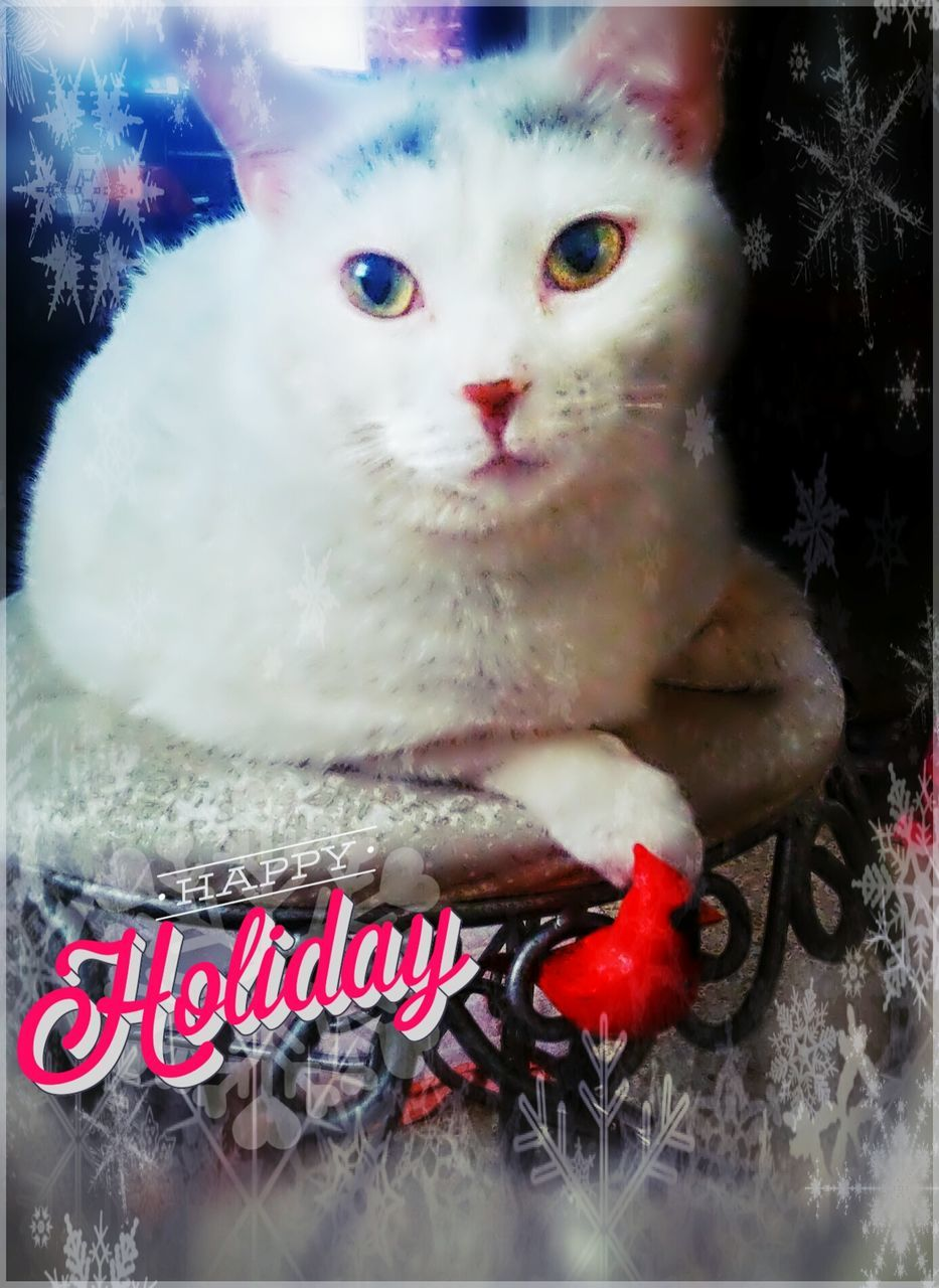 text, pets, one animal, animal themes, christmas, domestic cat, domestic animals, no people, mammal, feline, close-up, christmas decoration, indoors, day