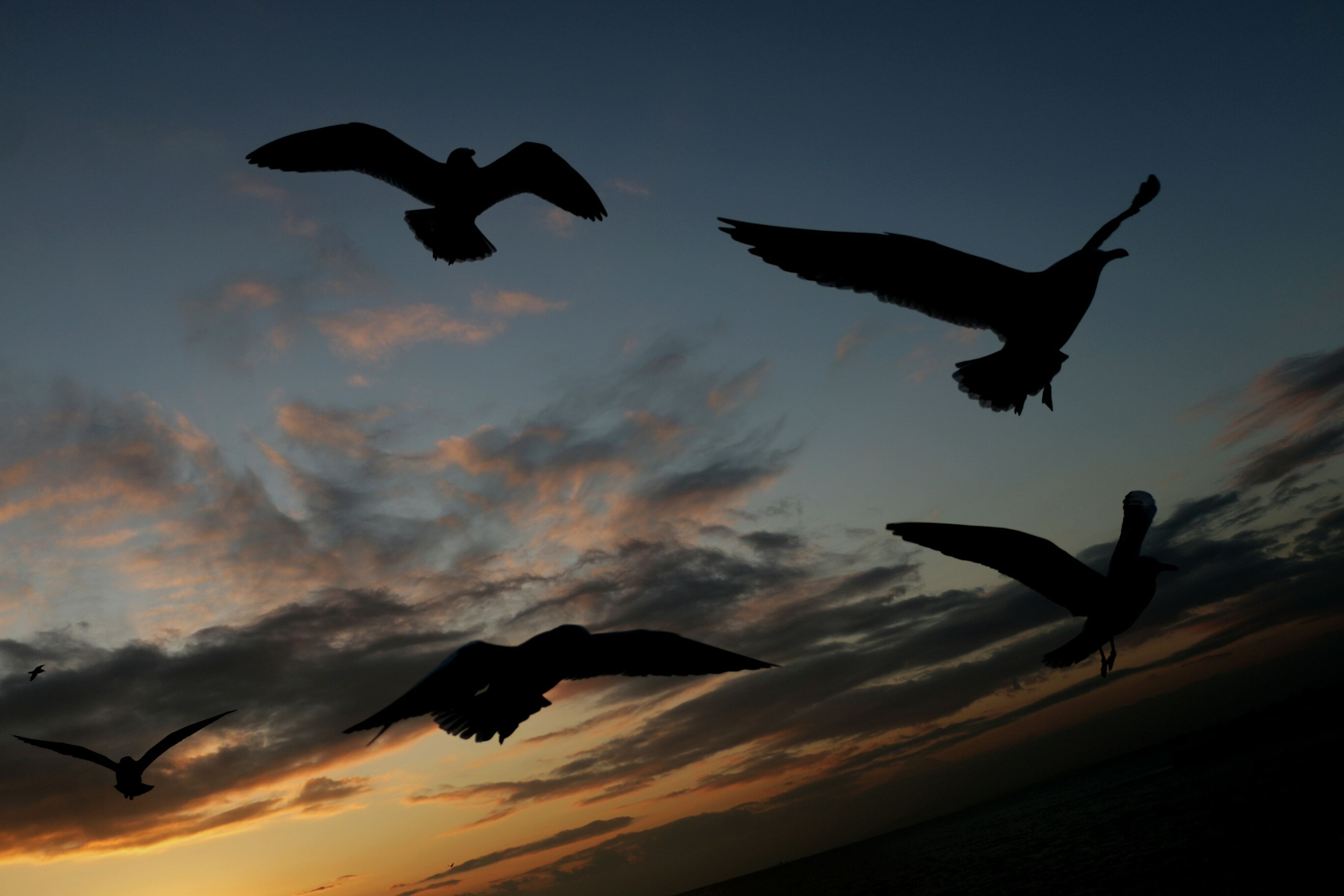 flying, bird, spread wings, animal themes, silhouette, animals in the wild, mid-air, wildlife, sky, low angle view, sunset, cloud - sky, seagull, nature, motion, beauty in nature, cloud, dusk, full length, freedom