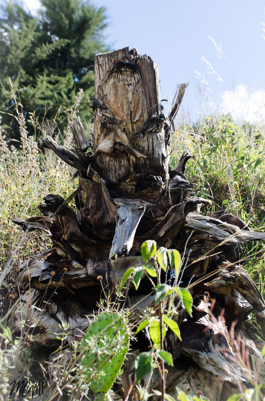 nature, growth, day, no people, field, tree, tranquility, outdoors, plant, sunlight, beauty in nature, close-up, dead tree