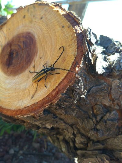 Day Outdoors Tree Stump Nature Animal Themes No People One Animal Tree Ring Tree Trunk Close-up Animals In The Wild Insect Villa Corona