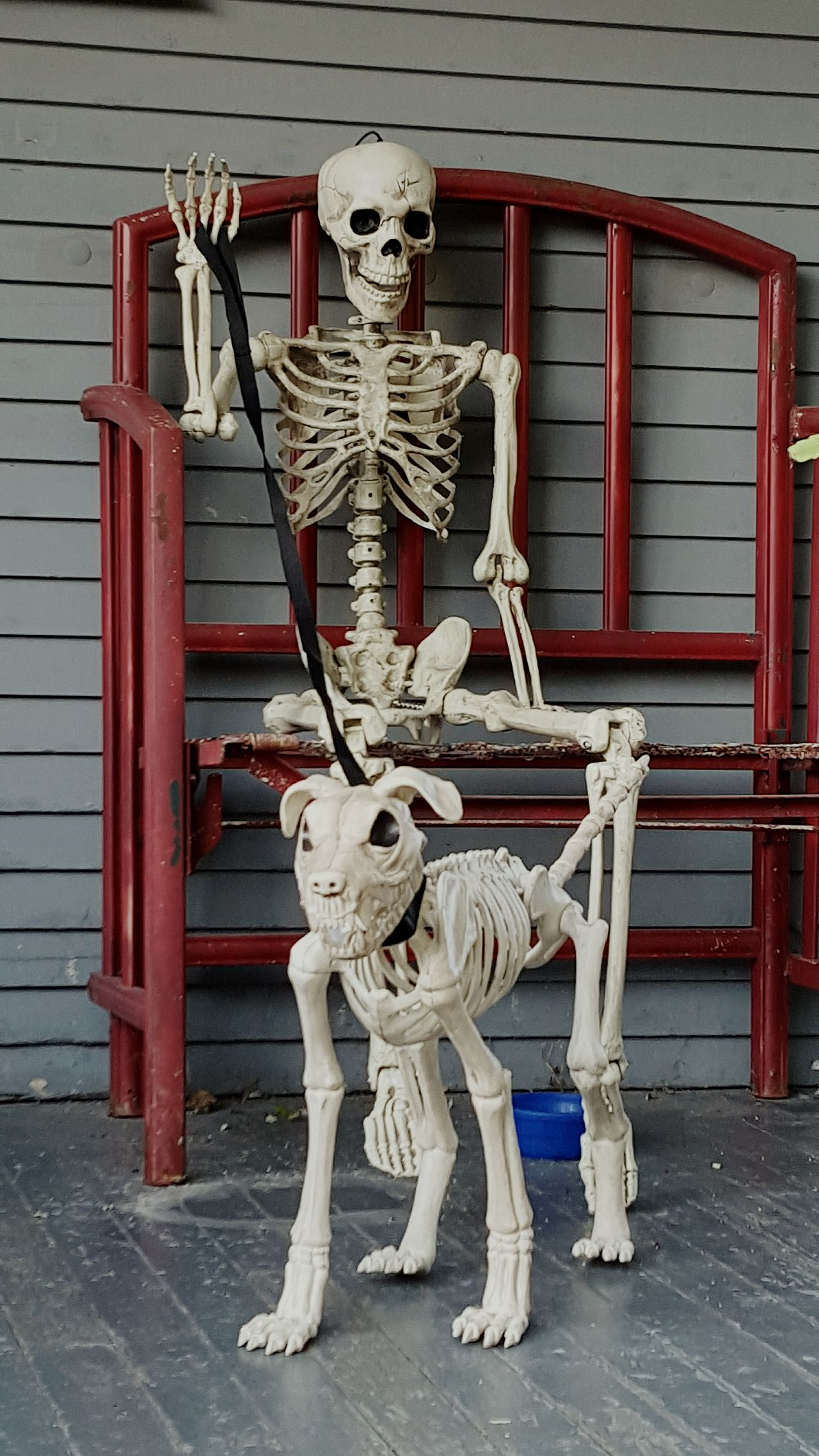 Happy Halloween Halloween EyeEm Halloween Horrors Halloween_Collection Ready For Halloween