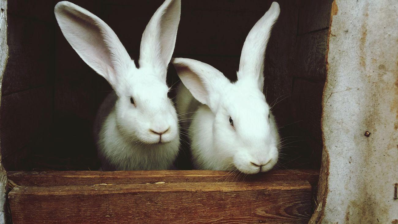 Aliceinwonderland White Rabbit Holiday Good Old Times Kidstime Summer Memories... Taking Photos