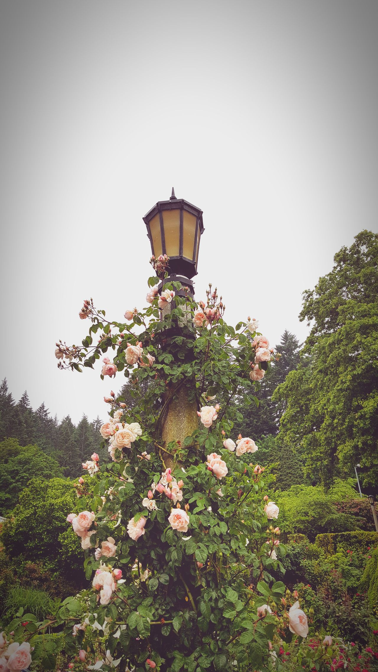 Something out of a fairytale at Portland Rose Garen Flower Growth Freshness Plant Fragility Green Color Beauty In Nature Botany Nature Park - Man Made Space In Bloom Day Blossom Blooming Springtime Pink Color Outdoors Flower Head Formal Garden Petal Pink Roses Climber Pinkroses Pink Rose Pink Flowers Pink Roses