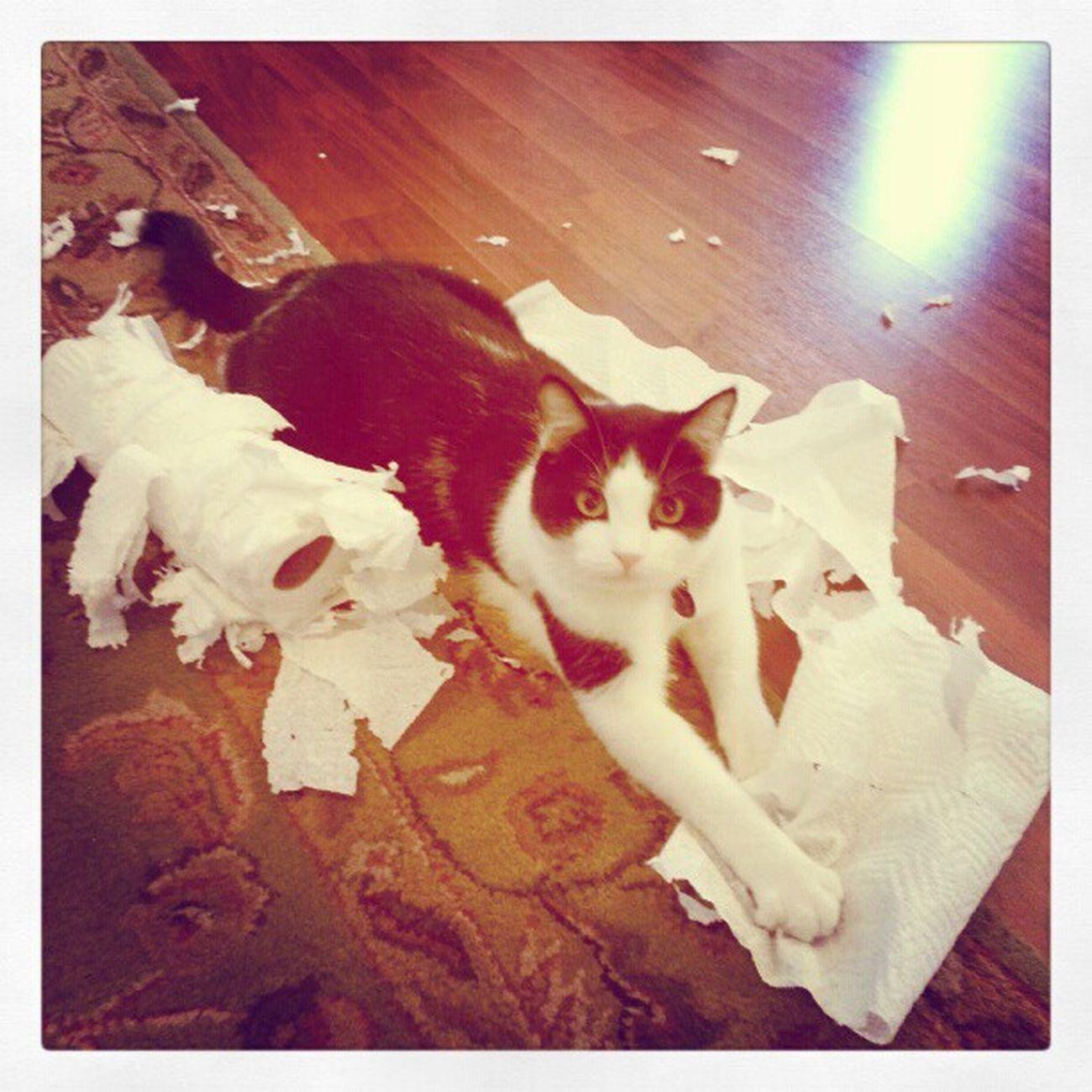 Richardthecat Papertowels Messykitty Catsofinstagram