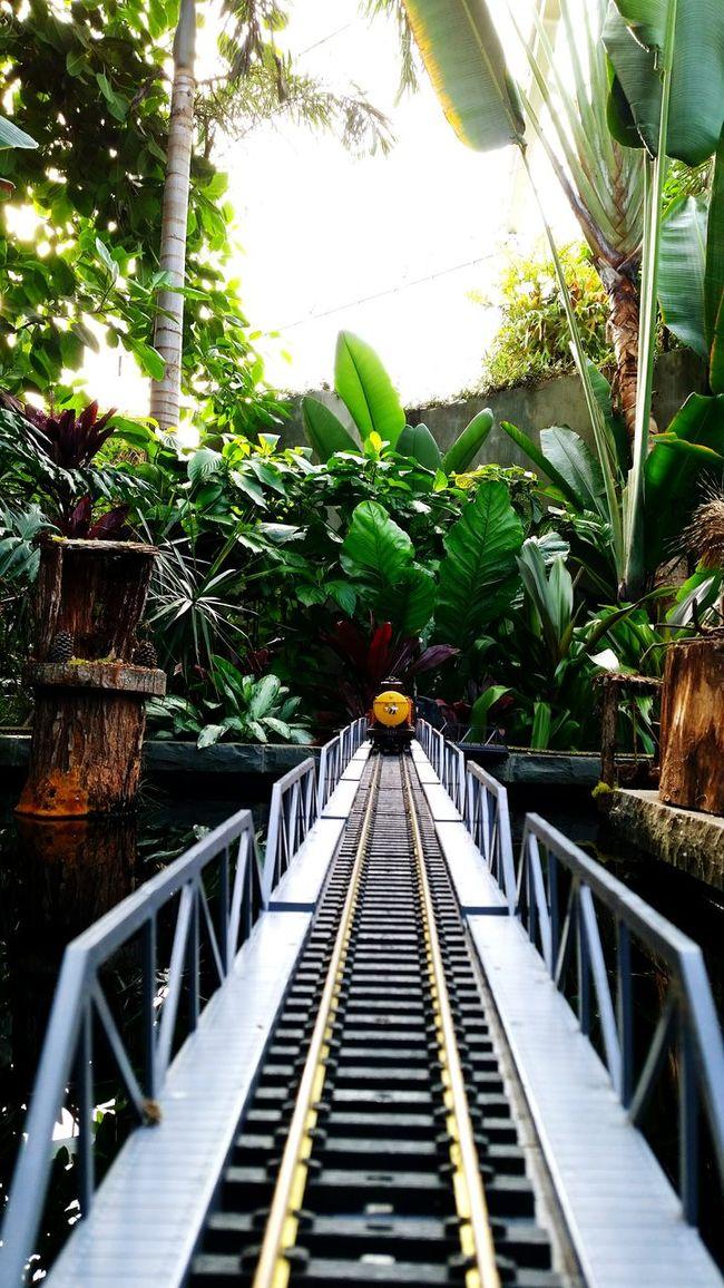 Anythingfortheshot Risky Business Risky Shots Train Toytrain On Black Water EyeEm Nature LoverBlack Water Gardens Botanical Gardens Conservatory Beauty Pivotal IdeasBetter Look Twice Showcase: January