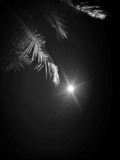 Late Night Beautiful VampLife Love