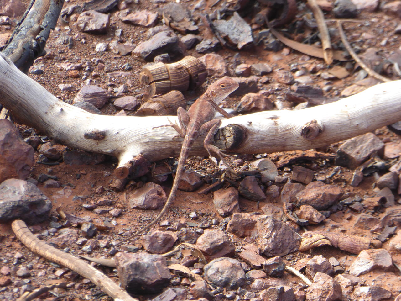 no people, day, animal bone, field, wood - material, outdoors, nature, close-up, tree trunk, tree, dead tree
