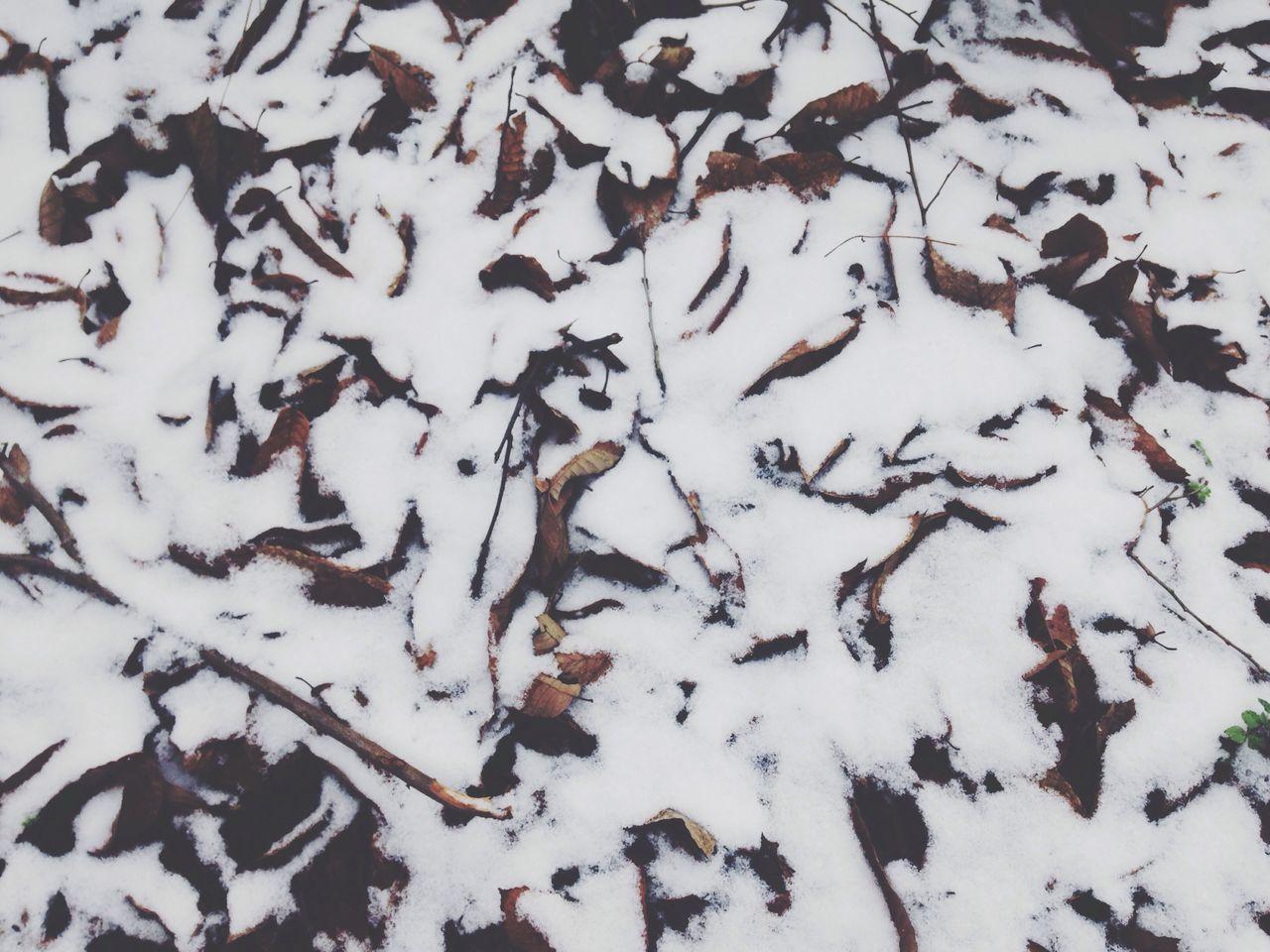 Full Frame Shot Of Fallen Leaves On Snowcapped Field During Winter