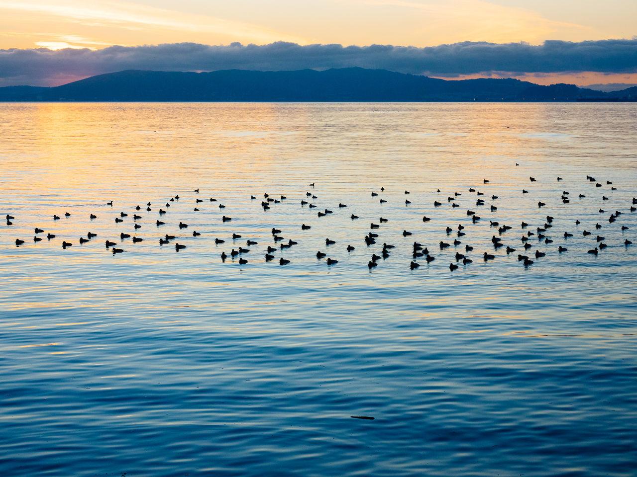 Beautiful stock photos of ocean, Animal Themes, Animals In The Wild, Beauty In Nature, Bird