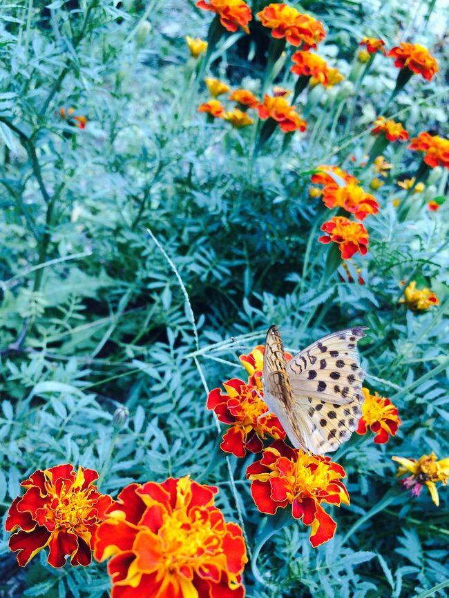 Butterfly Flower Red&blue