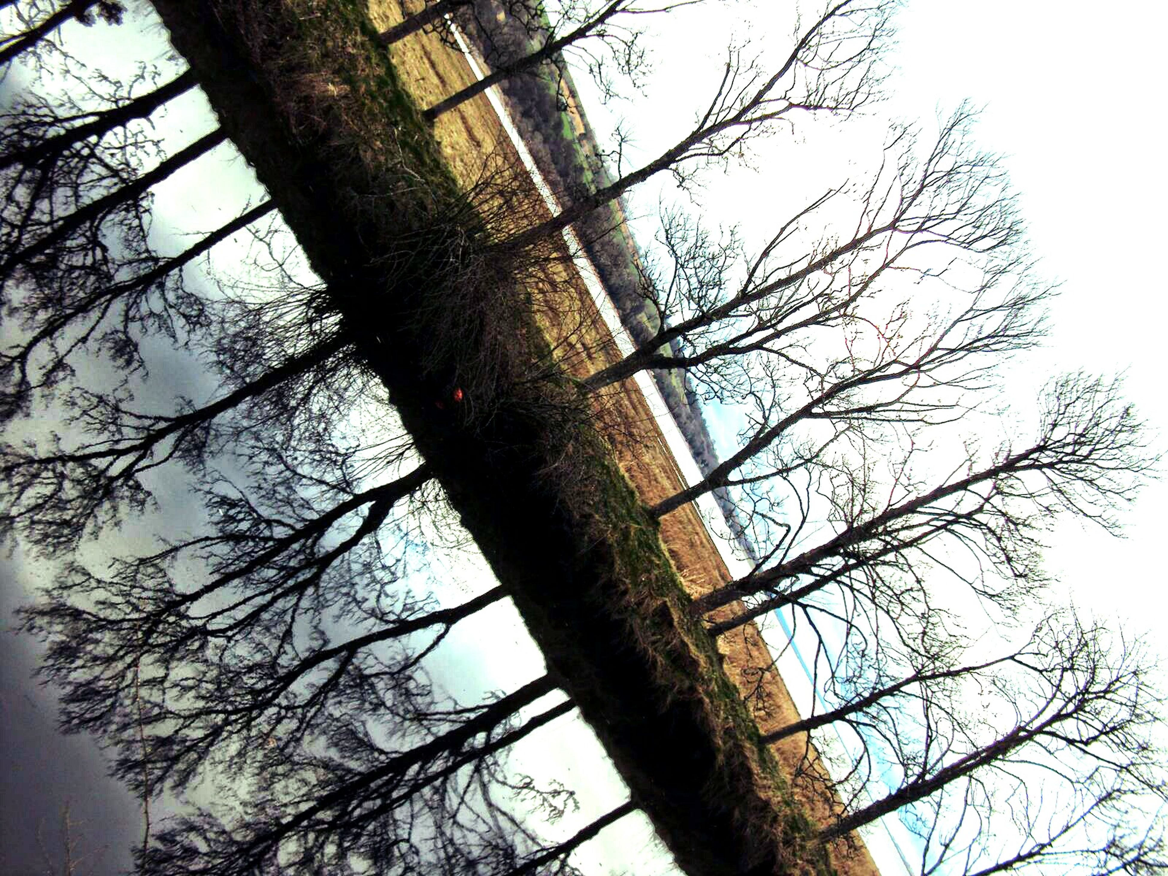 branch, tree, low angle view, bare tree, clear sky, tree trunk, nature, sky, growth, tranquility, day, beauty in nature, outdoors, no people, scenics, directly below, high section, twig, silhouette, sunlight