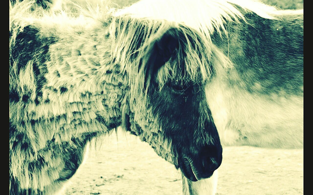 one animal, animal themes, mammal, no people, domestic animals, close-up, day, animals in the wild, outdoors, nature